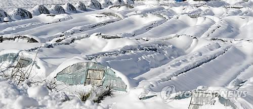 농식품부, 대설·한파 등 겨울철 농업재해 대비체제 가동