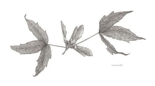국립수목원 9개 식물 교실 수강생 작품 전시