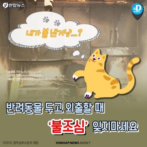 고양이가 인덕션 스위치 눌러 화재…서울서만 올해 31건