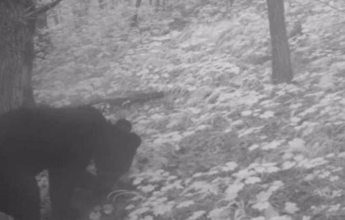 반달곰 서식지 백두대간으로 넓어지나…덕유산 일대서도 첫 발견