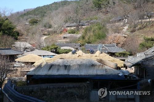 경주 양동마을 초가 새단장…내년 1월까지 볏짚 이엉 교체