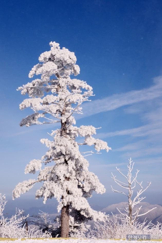 HK영상|덕유산 설경의 아름다움, '겨울 산의 매력 속에 빠져보세요~'