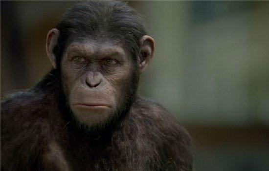 영화 <혹성탈출: 진화의 시작>│그들은 어떻게 인간을 지배하게 되었나