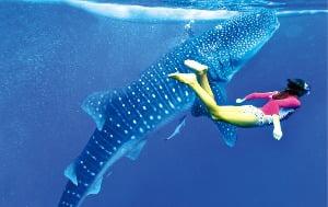 필리핀 세부 오슬롭 고래상어 투어  와그트래블 제공