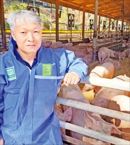 스트레스 없는 豚…동물복지 축산물 시장 이끌다