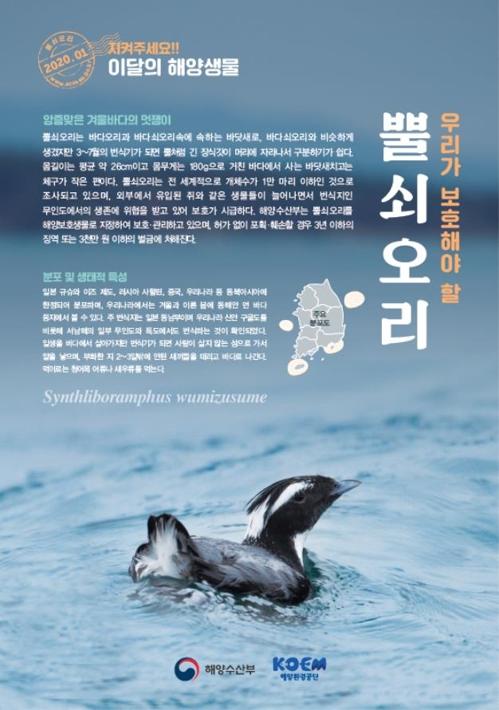 새해 첫 이달의 해양생물은 뿔쇠오리