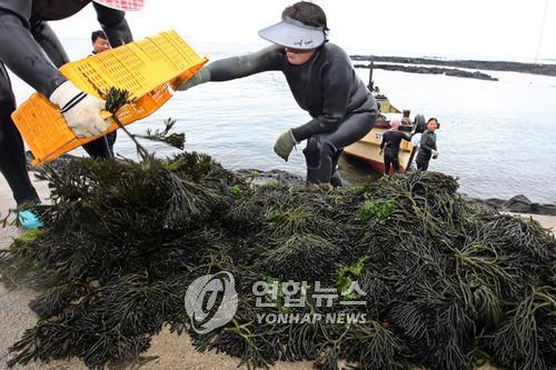 [알쏭달쏭 바다세상](45) 이게 들어가면 김치가 고상해진다?