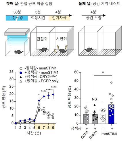 IBS, 머리에 빛 비춰 기억력 높이는 기술 개발