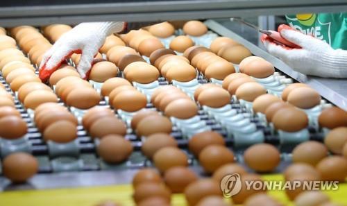 충남도 가정용 달걀 선별·포장 의무화…위생관리 강화