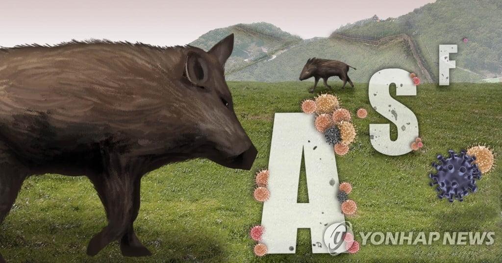 연천 민통선 내 멧돼지 폐사체서 돼지열병 바이러스 검출… 총 59번째