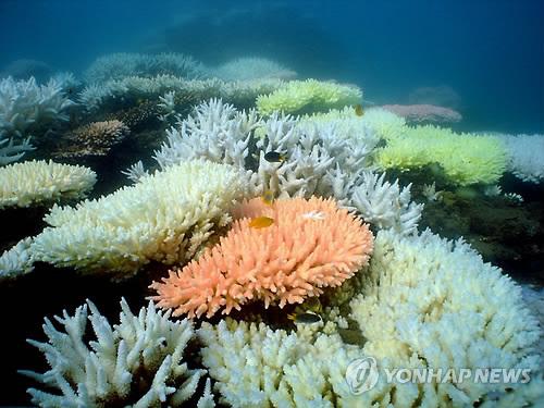 """""""해초가 산호초 기후변화로부터 보호해주는 핵심 역할"""""""