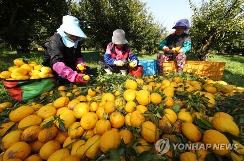 """고흥 유자 음료 미국 시장 진출…""""고유 상표로 승부"""""""