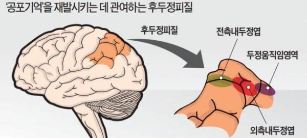 '기억법' 비밀 푸는 뇌과학…안 좋은 기억 지우고 행복한 기억은 살린다