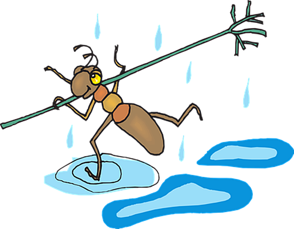 대학생 '개미'가 주식 시장에서 '존버'하는 법···단타에서 가치투자까지