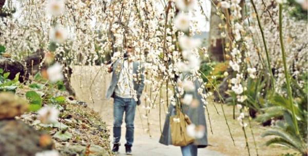 제주 매화축제는 봄이 시작하는 3월 초까지 열린다.