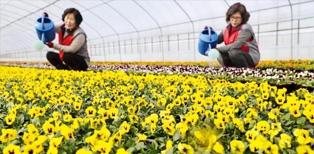 봄 성큼…활짝 핀 팬지꽃