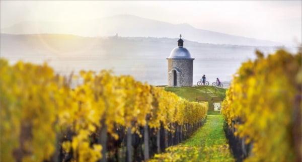 체코 와인의 자부심 모라비아의 포도밭 풍경. 체코관광청 제공