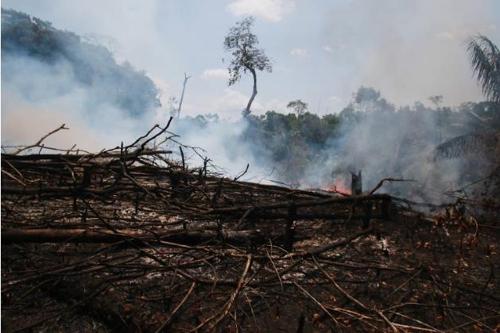 브라질 군부, '아마존 국제화' 주장 프랑스를 전략적 위협 간주
