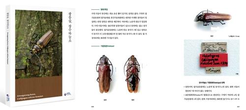 국립수목원, 장수하늘소 13년간 연구해 백서 발간