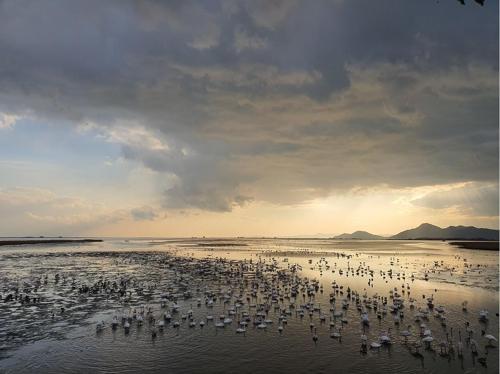 철새도래지 낙동강하구 3년 연속 생태관광지역 지정