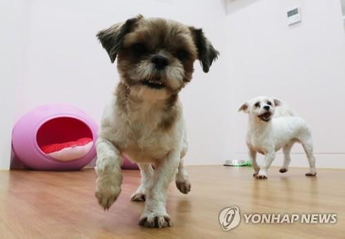 경기도, 가정폭력 피해자 반려동물 돌봄 서비스