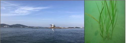 경남 통영 선촌마을 앞바다 해양보호구역으로 지정