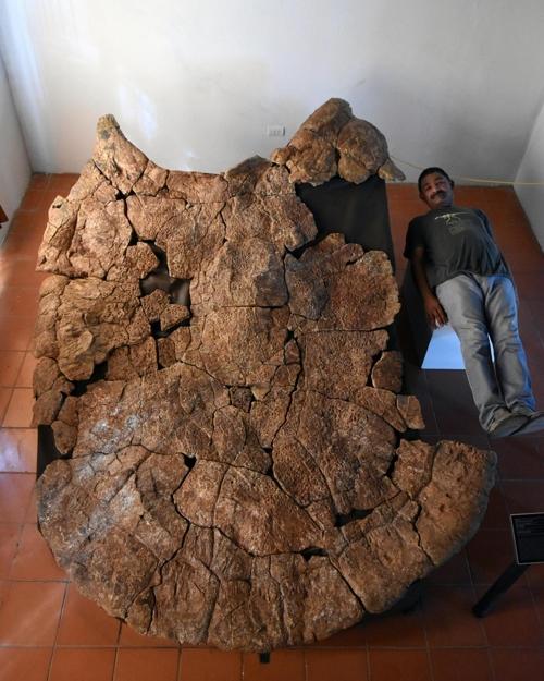 승용차만한 초대형 고대 거북도 공룡급 악어가 천적