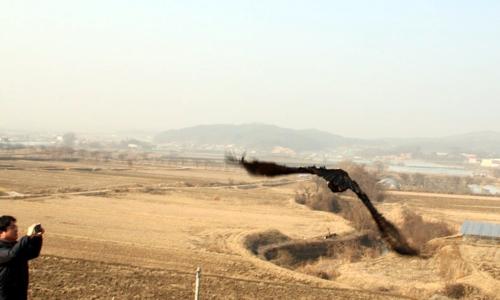 충북도 동물위생시험소, 재활치료 마친 야생 독수리 방사