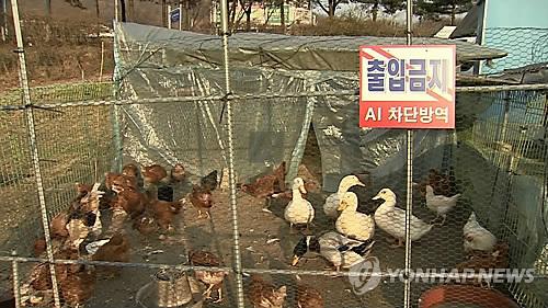 닭·오리 들이려면 사전 신고해야…어기면 최대 500만원