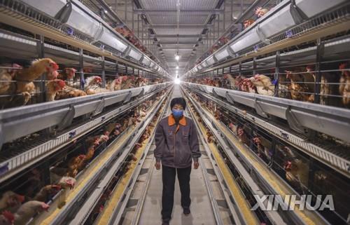 '엎친 데 덮친 격' 중국서 조류인플루엔자도 발병