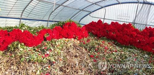 화훼농가 돕자…줄 잇는 꽃 할인 판매행사