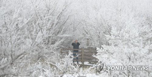 제주 일요일부터 막바지 강추위…산지 최고 20㎝ 눈