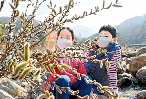 봄마중 나온 버들강아지