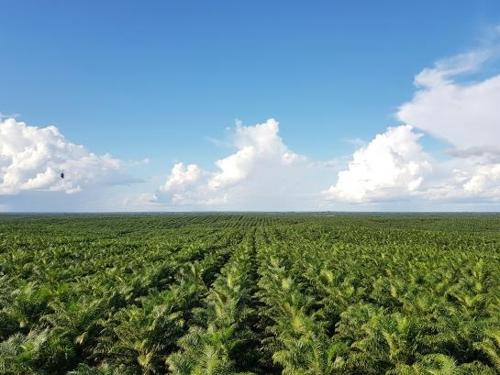 포스코인터내셔널, 국내 첫 팜사업 환경사회정책 선언