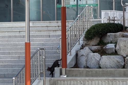 나른한 봄날까지 이어진 방학…교정은 도둑고양이 놀이터