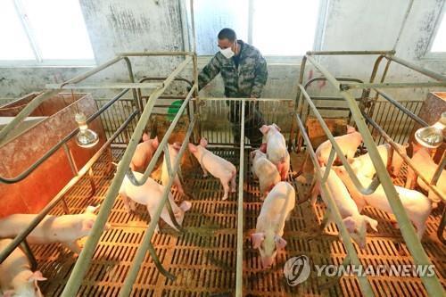 """중국 농업농촌부 """"아프리카돼지열병 백신 임상시험 신청접수"""""""