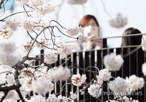 '사회적 거리 두기' 충북 봄 축제·행사 줄줄이 취소 또는 연기(종합)