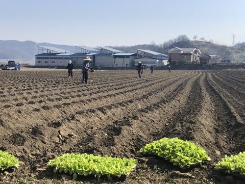 [카메라뉴스] 이동 제한 풀린 괴산 주민들, 밀린 농사일로 분주