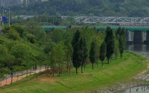 작년에 서울에 나무 827만그루 심었다…2022년까지 3천만그루