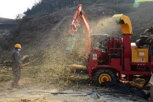 코로나19에도 대구·경북 소나무재선충병 방제 90% 이상 진행