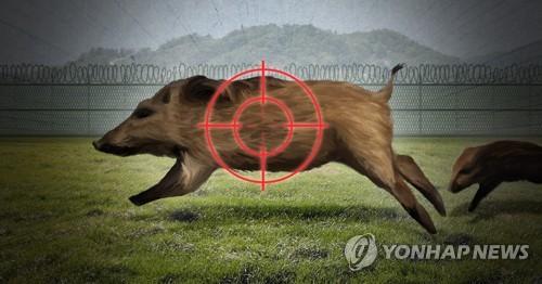 봄철 아프리카돼지열병 확산 우려…멧돼지 포획 강화