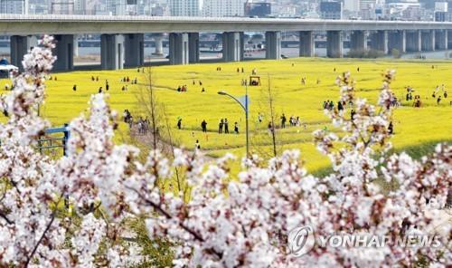 """""""곧 벚꽃·유채꽃 흐드러질 텐데…"""" 부산 봄축제 줄줄이 취소"""