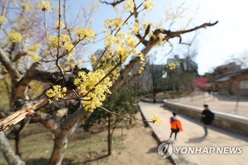 [날씨] 일요일 전국 맑고 포근…수도권 오전 미세먼지 '나쁨'