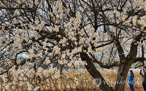 '코로나19에도 봄은 봄'…화사한 꽃 유혹에 늘어난 야외 나들이