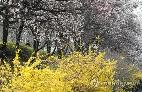 포근한 봄 날씨 이어져…미세먼지 곳곳 '나쁨'
