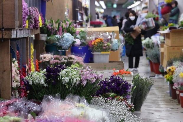 신종 코로나바이러스 감염증(코로나19) 확산으로 화훼업계가 울상을 짓고 있는 가운데 온라인에서는 꽃 판매량이 늘고 있는 것으로 나타났다./ 사진=연합뉴스