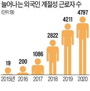 """""""일당 13만원 선지급""""…외국인 노동자 떠난 농촌 '구인 전쟁'"""