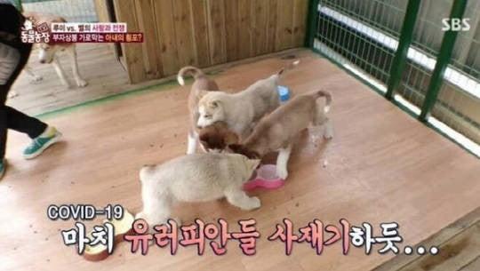 /사진=지난 5일 방송된 '동물농장' 캡처