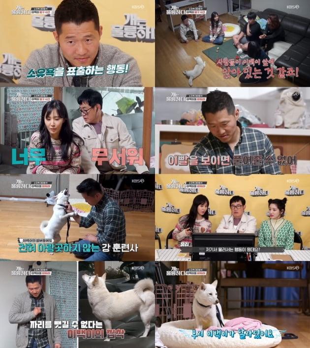 지난 13일 방송된 '개는 훌륭하다'/ 사진제공=KBS2