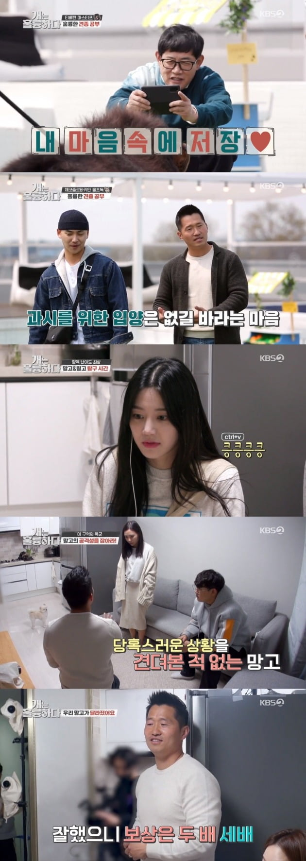 사진=KBS2 '개는 훌륭하다' 방송 화면.